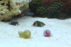 aquarium reef saltwater