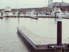 Ready to set sail (ohpapercut) Tags: sea lake bird wisconsin port marina boat dock seagull portwashington ohpapercut