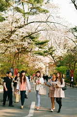 South Korea - Seoul - Kyung Hee University One of the most beautiful campus in Korea (ThomasLecomte) Tags: 35mm canon campus university korea korean seoul universidad cherryblossom filmcamera canona1 argentique  core  corea  kyunghee sel kyungheeuniversity