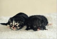 ♥❤♥ Kittens ( =';'= )