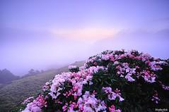 @_hehuanshan _Taiwan (monbydick) Tags: park landscape nikon taiwan  national  taroko       d90   hehuanshan          monbydick