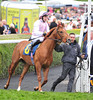 Wayne Rooney's horse Tomway (which finished second last ) Ladies Day at Chester Racecourse Cheshire, England