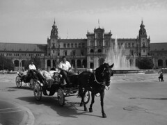 Plaza de Espaa (reena azim negi) Tags: trip travel vacation blackandwhite bw espaa horse holiday building history fall fountain architecture ceramic sevilla andaluca spain europe european carriage ride capital towers culture tourist seville historic adventure spanish tiles artdeco andalusia benches 1928 plazadeespaa espaol iberianpeninsula tiled halfcircle sevillano provinces polychromatic spanisharchitecture alcoves anbalgonzlez semicircular renaissancerevival parquedemaraluisa sevillian spainsquare reinodeespaa kingdomofspain marialuisapark sevillan neomudjar iberoamericanexposition