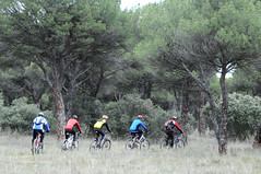 culebrilla multicolor (Luis_G.) Tags: valladolid ciclismo pinar ciclistas serpientemulticolor
