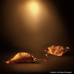 Autumn memories (Ivn Maigua) Tags: lighting light golden nikon autumnleaf nikond200 autumnmemories ivnmaigua