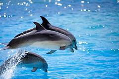 dolphins (dtsortanidis) Tags: sea sun water canon reflections island drops high jump dynamic action dolphin mark greece ii dolphins 5d splash f18 vacations ef dimitris 200mm dimitrios tsortanidis