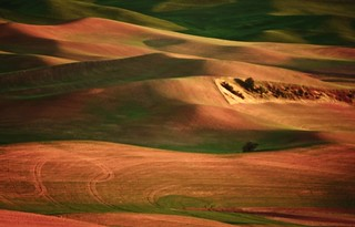 ... golden hour - the Palouse ...
