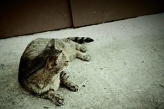 Resting (-13AM-) Tags: cats cat ginger kitty kitties