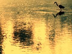 Illusion (Carmelo61 PhotoPassion Thanks) Tags: venice sea italy sun holiday beach italia mare lagoon laguna mestre iesolo lignano veneto jesolo caorle tessera eraclea cavallino missitalia treporti aironi lagunadelmort mygearandme