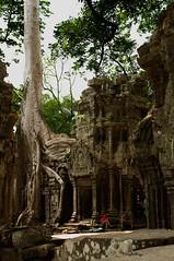 Ta Prohm (Henry der Mops) Tags: travel orange reisen cambodia kambodscha southeastasia südostasien monk buddhism siemreap angkor taprohm hindu unescoworldheritage angkorthom mönch buddhismus avalokiteshvara hinduismus bodhisattvas unescoweltkulturerbe canoneos500d würgefeigen shivaismus khmerarchitektur mahayanabuddhismus