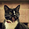 meeeee-ow (Black Cat Photos) Tags: blackcatphotos