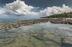Brazil - Tamandar (Nailton Barbosa) Tags: brazil praia beach brasil de mar nikon bresil brasilien pe litoral pernambuco brasile oceano nordeste brsil carneiros tamandar arrecifes d80