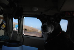 Watching the world go by (What I saw...) Tags: dog lighthouse scotland collie border molly toyota campervan stoer hiace