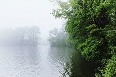 Green and White (thiaacorn) Tags: landscape nature foggylake mistylake lakescape water lake atmosphere foggy misty