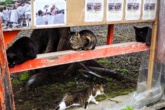 Today's Cat@2016-05-09 (masatsu) Tags: cat pentax catspotting mx1 thebiggestgroupwithonlycats