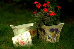 Flower pots (Tunde Tenkei) Tags: garden nikon pretty decoration d200 geranium flowerpots inthegarden stockimage giftware