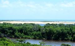 Mandacaru (felipe sahd) Tags: praia beach brasil flora oceanoatlntico maranho vegetao riopreguias litoralnordestino madacaru