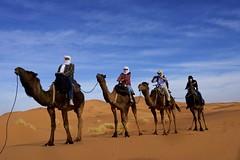 DSC3104 SUVs of the desert. (najeebmahmud) Tags: africa blue light red sky people white sahara nature clouds wow landscape nikon colorful colours desert awesome dune bluesky camel morocco nikkor camels 2470mm d810 nikond810 nikkor2470mm