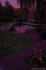 2 Minutes Before Sunrise (Imagination04) Tags: flowers reflection nature landscape illinois pond ducks il da arrowhead wr hdpentaxda1685mmf3556eddcwr pentax1685mm pentaxda1685mm