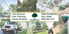 Bug Facts https://t.co/SR5P2lrtQA Thanks for Following us on Twitter! (treeservicejax) Tags: tree jacksonville service trimming removal treeservicejacksonville