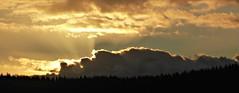 Setting Sun (sallyNZ) Tags: sunset sky orange clouds sunrays pinetrees settingsun ribbet scavenger6