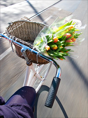day2195 tue20mrt2012 (a.pic.a.day) Tags: street flowers summer sun flower green stockings sunshine amsterdam bike panties spring panda basket legs streetlife biking lente pantyhose zon bloemen fietsen fiets tulpen bloem benen tulp flowerbasket tullips pandashot bikeshot