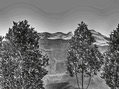 saudi scene (zbigphotography (1M+ views)) Tags: trees canon sand rocks desert east middle saudiarabia g12