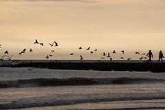"""breakers"" (CC) (marfis75) Tags: sunset sun holland beach netherlands silhouette strand dawn coast waves sundown gull gulls wave cc creativecommons breakers schatten mwen wandern stimmung breaking niederlande laufen kste wellen brandung szene marfi"