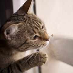Cat's love (HBPhotographie) Tags: france love de rouge chat europe european y kitty kittens strasbourg cest amour nancy terre plus moment avenue monde lorraine couleur beau ahah tendresse ce carr aimer coccinelle sentir chaton vitre quil europen univers tigr vandoeuvre agglomration renifler jarville