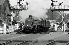 NYMR Steam Gala 2012, Grosmont. 60007 'Sir Nigel Gresley' B&W (Kev's.Pix) Tags: train village trains steam northyorkshire steamtrain steamtrains grosmont nymr yabbadabbadoo sirnigelgresley