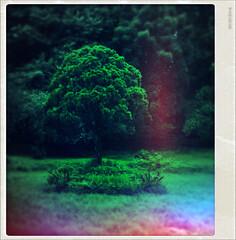[Deja Vu Tree] (Priom) Tags: color tree nature vintage dream retro burn hue vu bangladesh deja priom