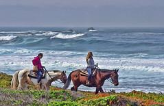 A cool ride (n.pantazis) Tags: ocean california horses horse rocks waves pacific pebblebeach 17miledrive equestrian horseriding spanishbay oceancoast roughsea pebblebeachequestriancenter