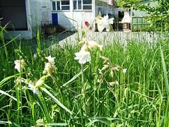 unbekannte blhende pflanze, NGID1399399283 (naturgucker.de) Tags: naturguckerde 915119198 11941622 chelmutschmidt 1484691656 ngid1399399283