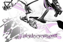 purple horse (JBZ) Tags: show horse water sport caballo cheval design fly jump energy power purple action events style atmosphere ground competition lila soil pferd hest paard boden fliegen erde obstacles hst springen stil konik hindernis