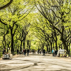 ~ in honour of spring ~ (Janey Kay) Tags: nyc trees newyork primavera spring shadows centralpark arbres squareformat printemps ombres baume formatcarr janeykay panasonic14140mm april2012 panasoniclumixdmcgh2 leicadgsummilux25f14 avril2012