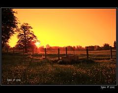 Morning Fields. (Picture post.) Tags: trees sun sunlight sunrise fence landscape interestingness shadows fields paysage arbre soe springtime buttercups supershot platinumheartaward stunningskies oracope mygearandme mygearandmepremium mygearandmebronze mygearandmesilver mygearandmegold blinkagain cattledrink