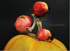 Recolectando... (Mara Morillas) Tags: nature pumpkin bodegn granada calabaza composicin canong11