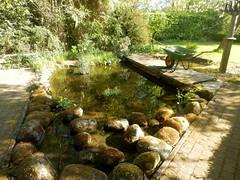 Garden Pond (Quetzalcoatl002) Tags: work garden pond gardening outdoor cleaning maintenance algae tuin wheelbarrow vijver algen