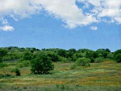 Landscape {126/366} (Explored) (therealjoeo) Tags: flowers sky texture kyle painting texas landsape