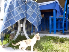 Siehst Du die Mama? (marion streich) Tags: restaurant kreta babycat babykatzen
