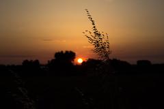 Tra luci e ombre (Shooting in RAW) Tags: panorama canon eos tramonto campagna cielo sole terra piante colori paesaggio controluce passeggiata flickrestrellas 1200d