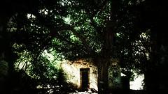 The strange treehouse. (PhotoMont) Tags: flickr flickrnature flickrenespaol fvac colourartaward elmanicomio flickrdoors elmundopormontera grangrupodeflickr