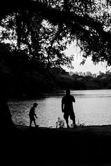 (gustavomorita) Tags: cisne criana gustavomorita ibirapuera lago parque parqueibirapuera pb selvasp silhueta sopaulo