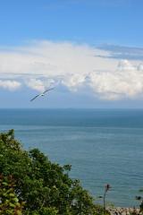A View From The Leas (EdwPhoto1) Tags: seagulls beach sunshine june skyline clouds coast kent afternoon horizon coastal tress folkestone 2016 theleas lowerleascoastalpark