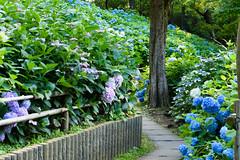 26Yamada Pond Park (anglo10) Tags: flower japan