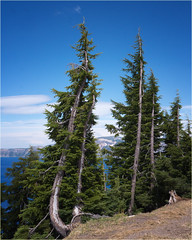 Crater lake tree (marneejill) Tags: blue sky lake beautiful view wind background crater growing bent bending