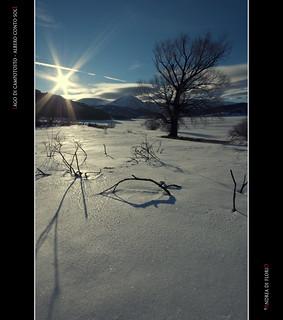 Lago di Campotosto - Albero contro sole