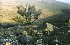 Trees Shelston Tor (jonshort58) Tags: camera film vintage fuji superia 200asa devon april tor dartmoor 1930 shelston leicai leitzxenon5cmf15