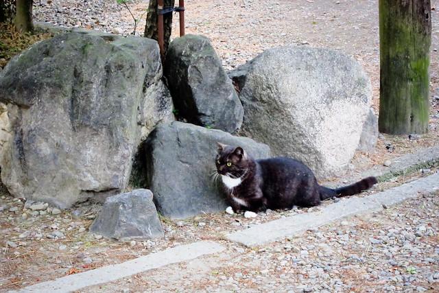 Today's Cat@2012-05-03