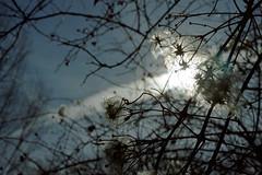 Light through the clouds ( V ) Tags: light sky mountain tree luz nature forest licht hungary lumire natura bosque wald ungarn luce hungria bkk  ungheria magyarorszg  hongrie  borsod  borsodabajzempln macaristan madarska  ilobsterit
